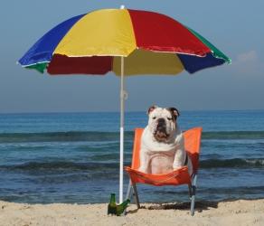 Як слідкувати за здоров'ям собаки влітку?