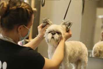 Власниця грумінг-салону Barber Pet Марія Горелова: «Сподіваюся, ми станемо для когось прикладом»