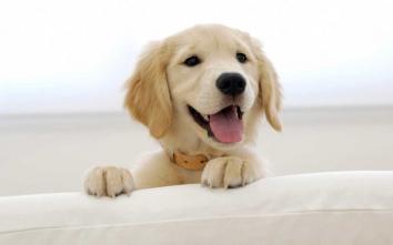 10 причин звернутися до ветеринара