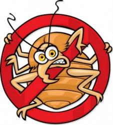 Як захистити собаку або кішку від укусів кліщів? Що робити якщо кліщ вкусив вашого вихованця?