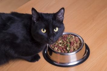 Блювота у кішки. Як вирішити проблеми з травленням?