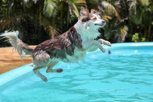10 правил купання собаки у водоймах влітку