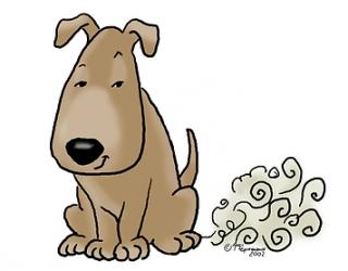 ТОП 10 найбільше пукаючих собак