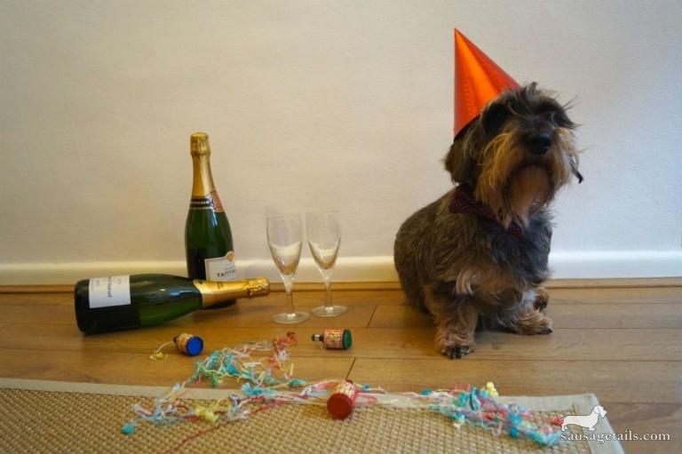 Якщо на Новий рік у вашому домі гості напідпитку і собака?