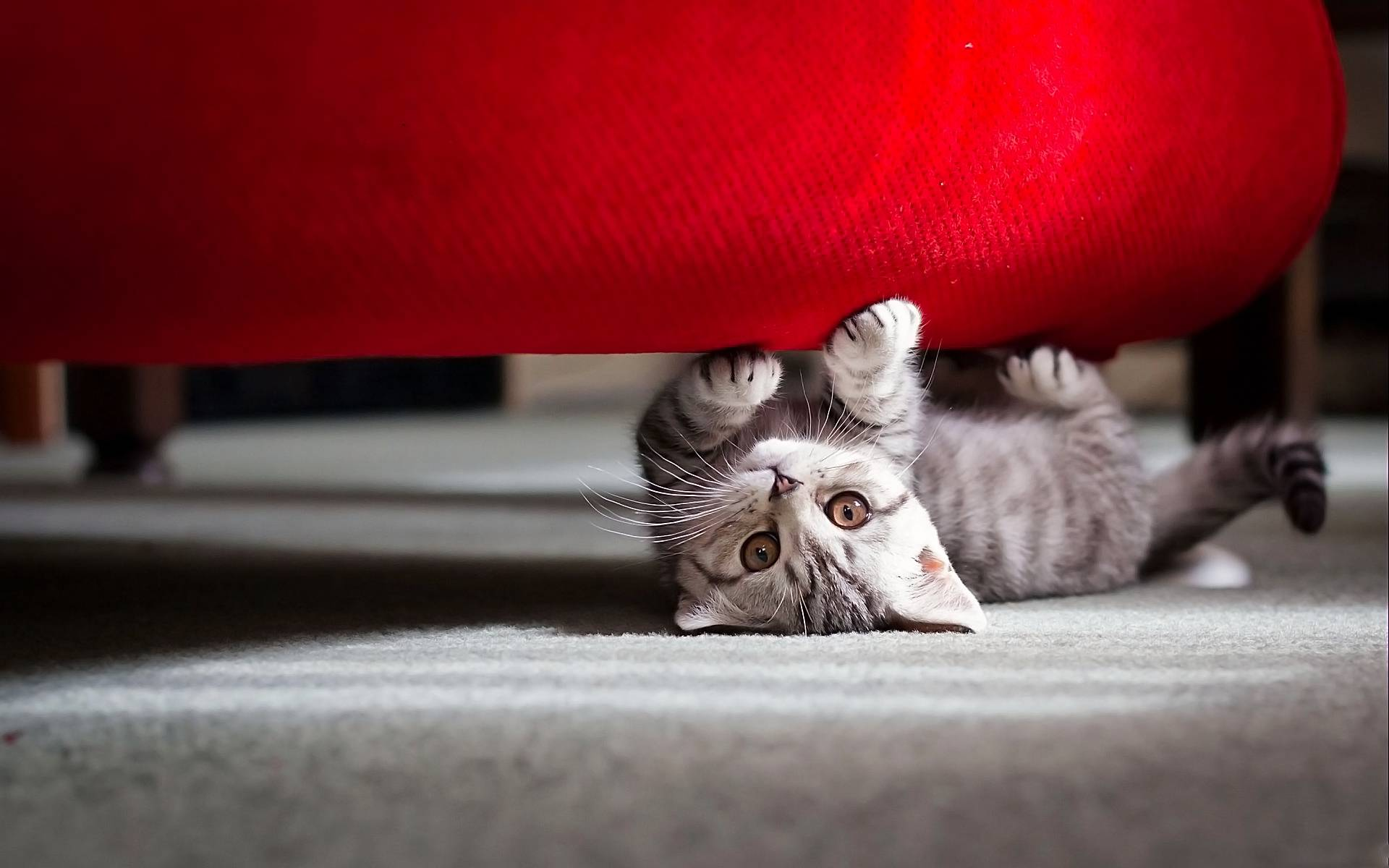 459144_cats_dont_disturb