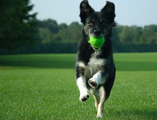 Як правильно дресирувати собаку в домашніх умовах?