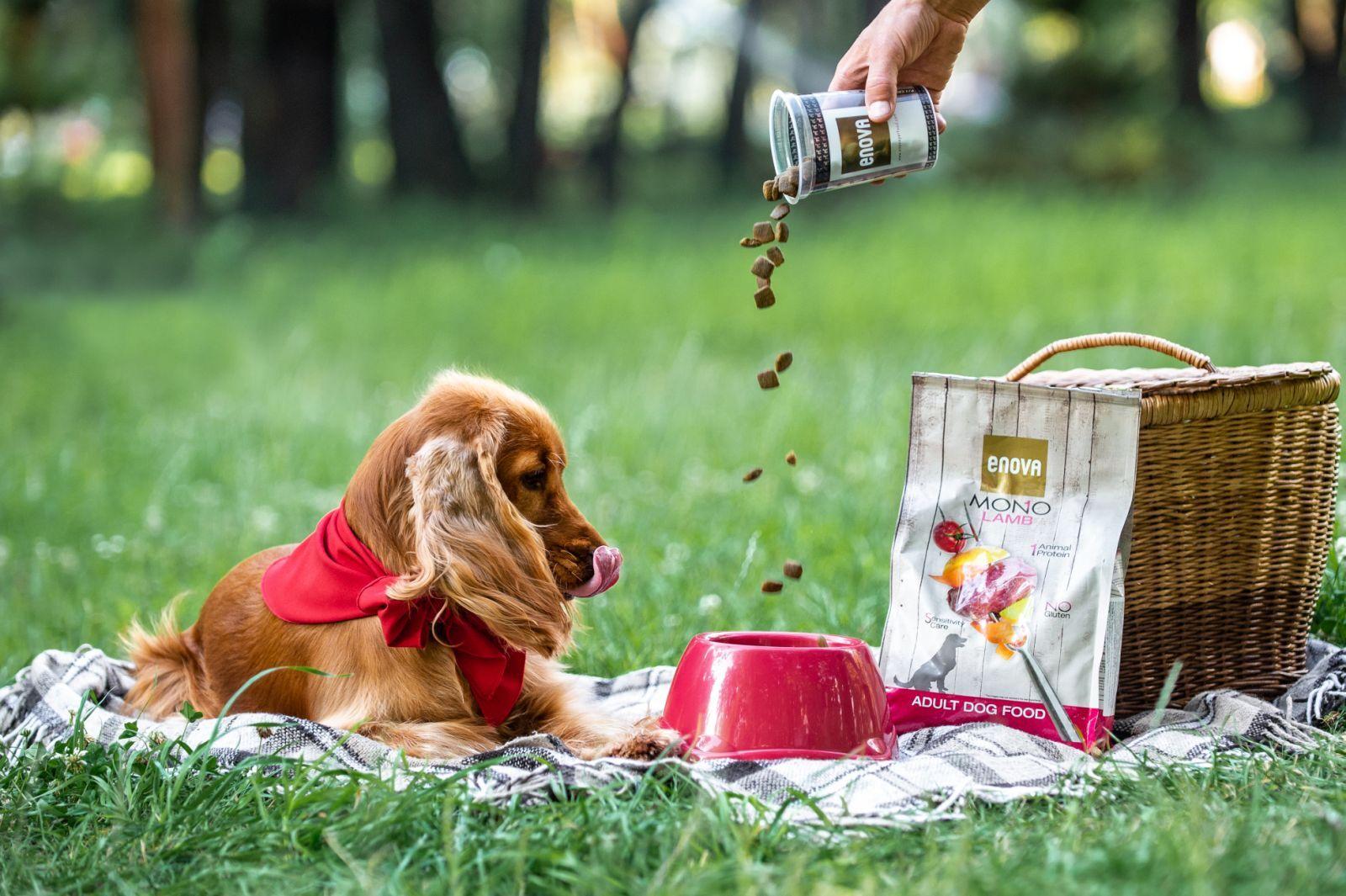 Корм для собак Enova ультра-премиум класса: отзывы и разбор состава