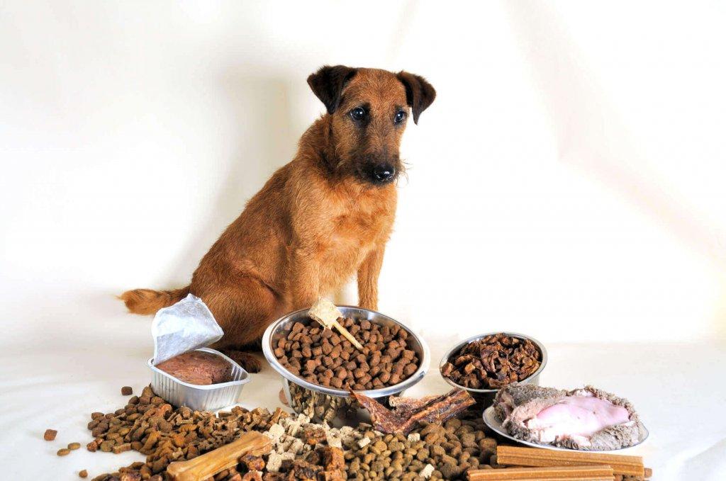 Кращі корми для собак