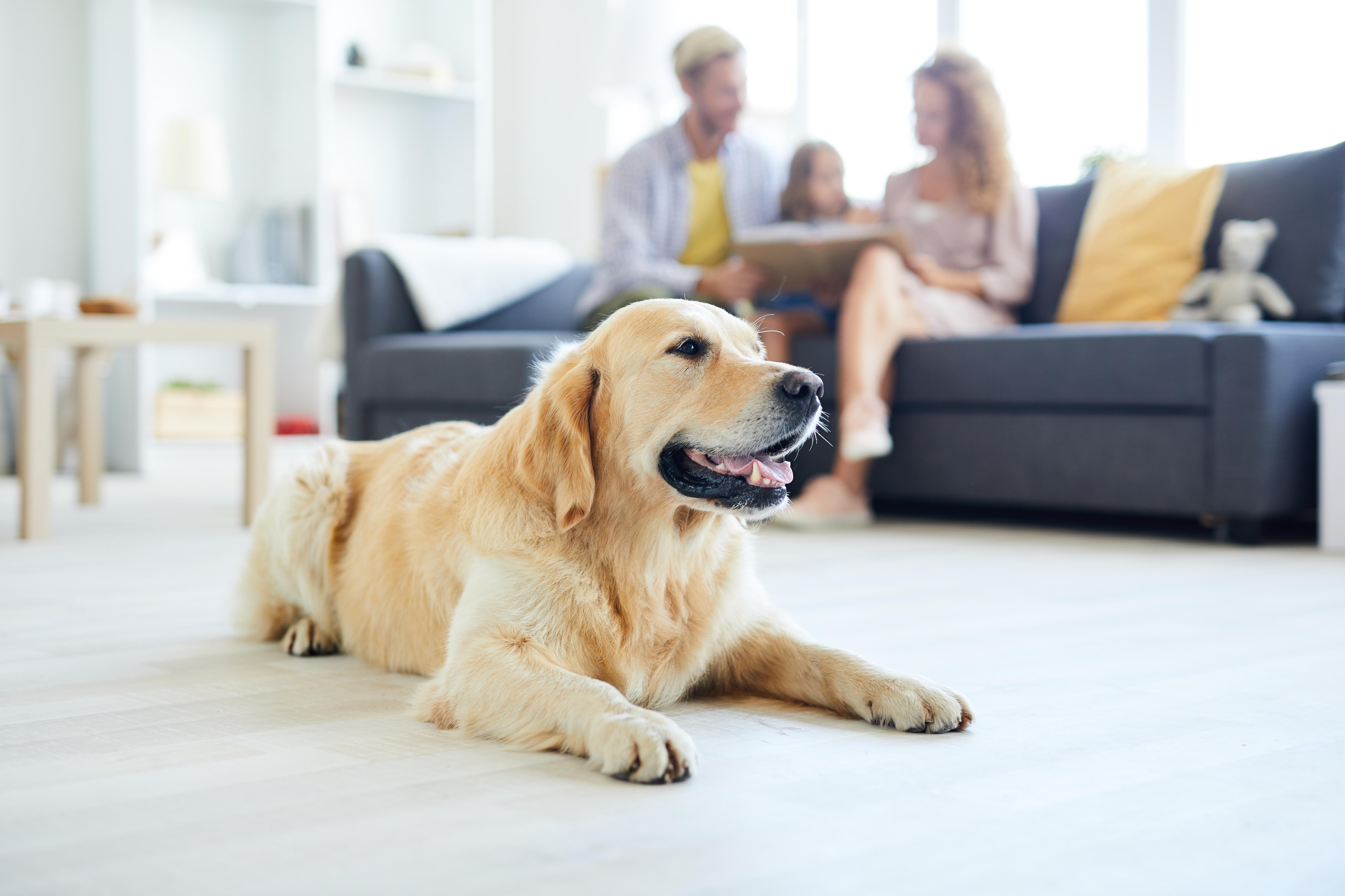 Лучший гипоаллергенный корм для собак