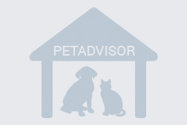 Криворожская городская государственная больница ветеринарной медицины