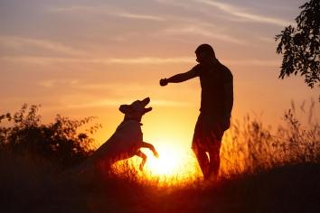 Чи здатні собаки любити?