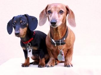 У Львові для власників собак діятимуть нові правила