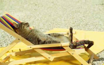 Кіт і літо. 10 заміток для власників котиків