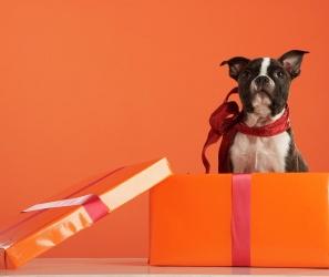 Собака - як сюрприз  або  На що варто звернути увагу, обираючи тварину в подарунок?