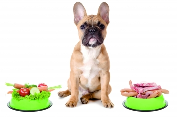 Не мясом единым или Зачем в рационе собаки фрукты, овощи и злаки?