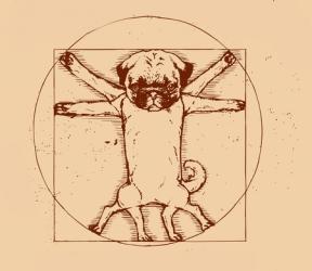 Как возникают новые породы собак?