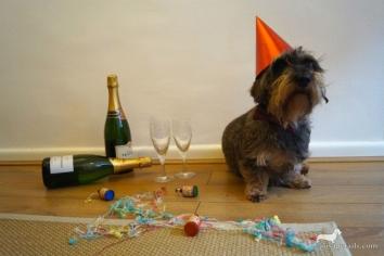 Если на Новый год в вашем доме подвыпившие гости и собака?