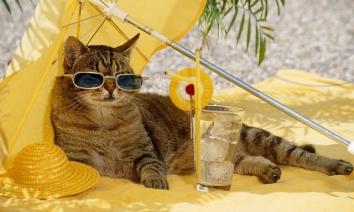 Мяу! Встановіть мені кондиціонер! Або як врятувати кота від спеки?