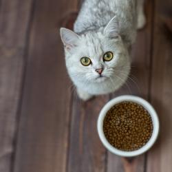 Кращі корми для кішок - види, особливості вибору, рейтинг найкращих кормів для кішок
