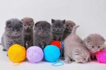 Как правильно ухаживать за котенком - уход, игрушки и питание